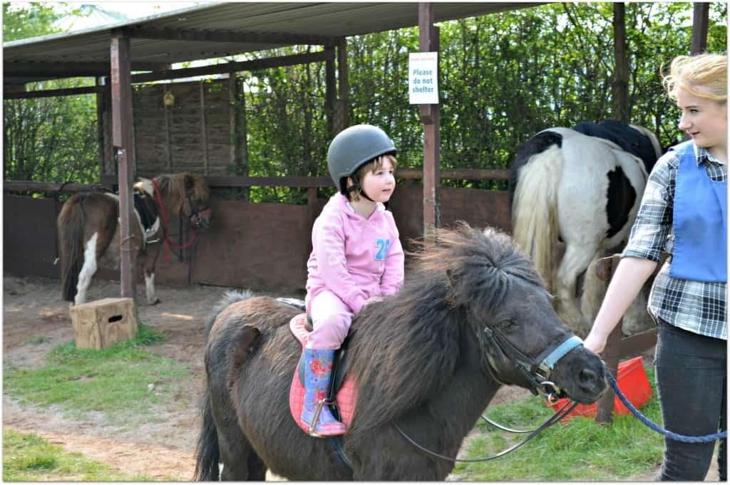 Pony Rides at Hatton Adventure World