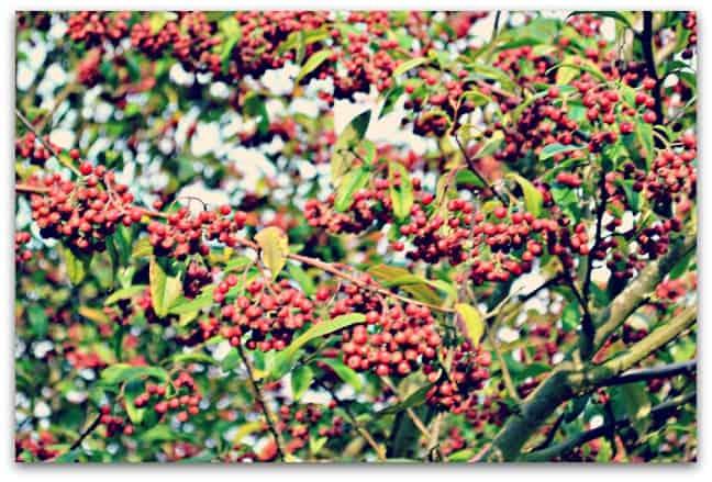 Colours of Autumn 1