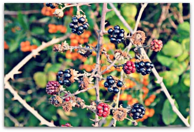 Colours of Autumn 3