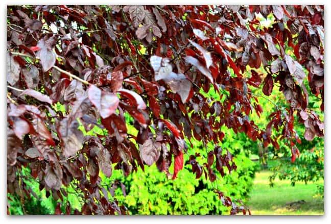 Colours of Autumn 6