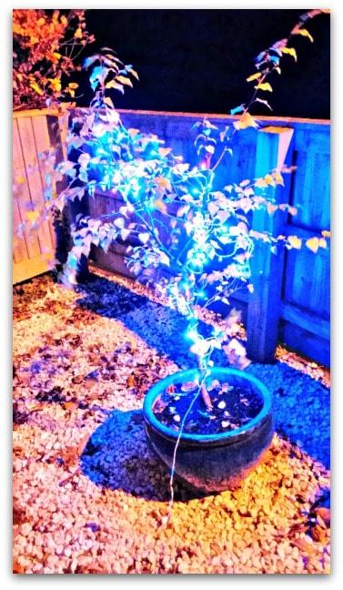 Christmas lights Low light setting