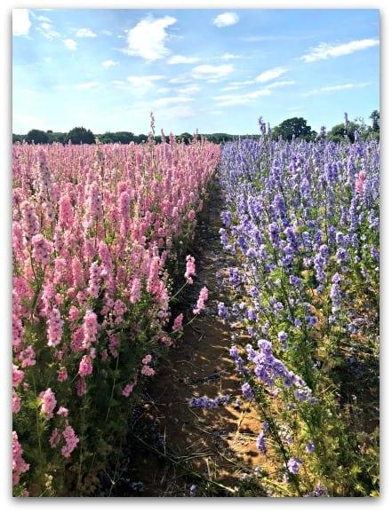 The Confetti Flower Fields